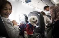 Hãng hàng không Japan Airlines chấp nhận cho hành khách mang