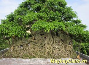 Những địa điểm du lịch đẹp nhất tại Thái Bình, chia sẽ kinh nghiệm du lịch Thái Bình Làng vườn Bách Thuận - Thái Bình