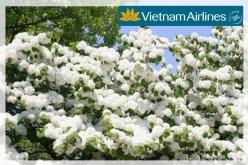 Đại lý vé máy bay giá rẻ tại huyện Ea Súp của Vietnam Airlines