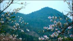 Vé máy bay giá rẻ Nha Trang đi Điện Biên của Jetstar
