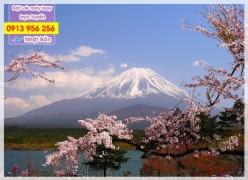 Hướng dẫn cách đặt chỗ trực tuyến vé máy bay đi Nhật Bản Hướng dẫn đặt chỗ trực tuyến vé máy bay đi Nhật Bản