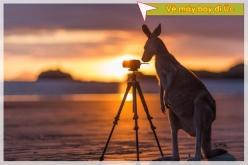 Hướng dẫn cách đặt chỗ trực tuyến vé máy bay đi Úc Hướng dẫn đặt chỗ trực tuyến vé máy bay đi Úc